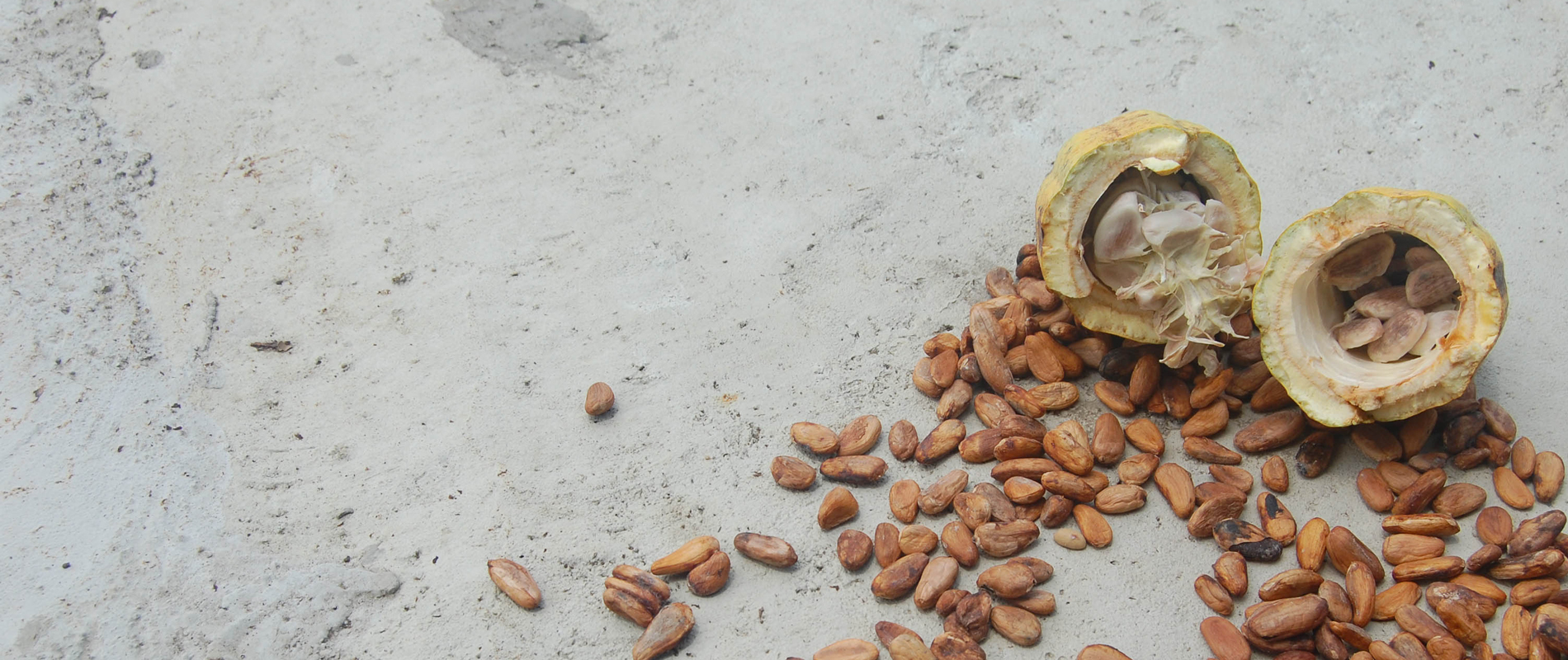 Équateur | Cacao