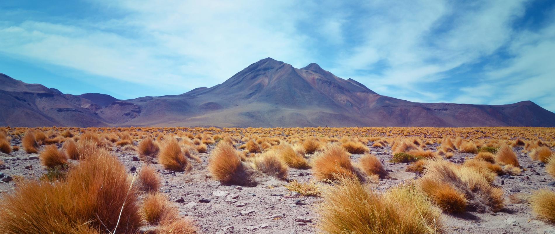 Chili | Désert d'Atacama