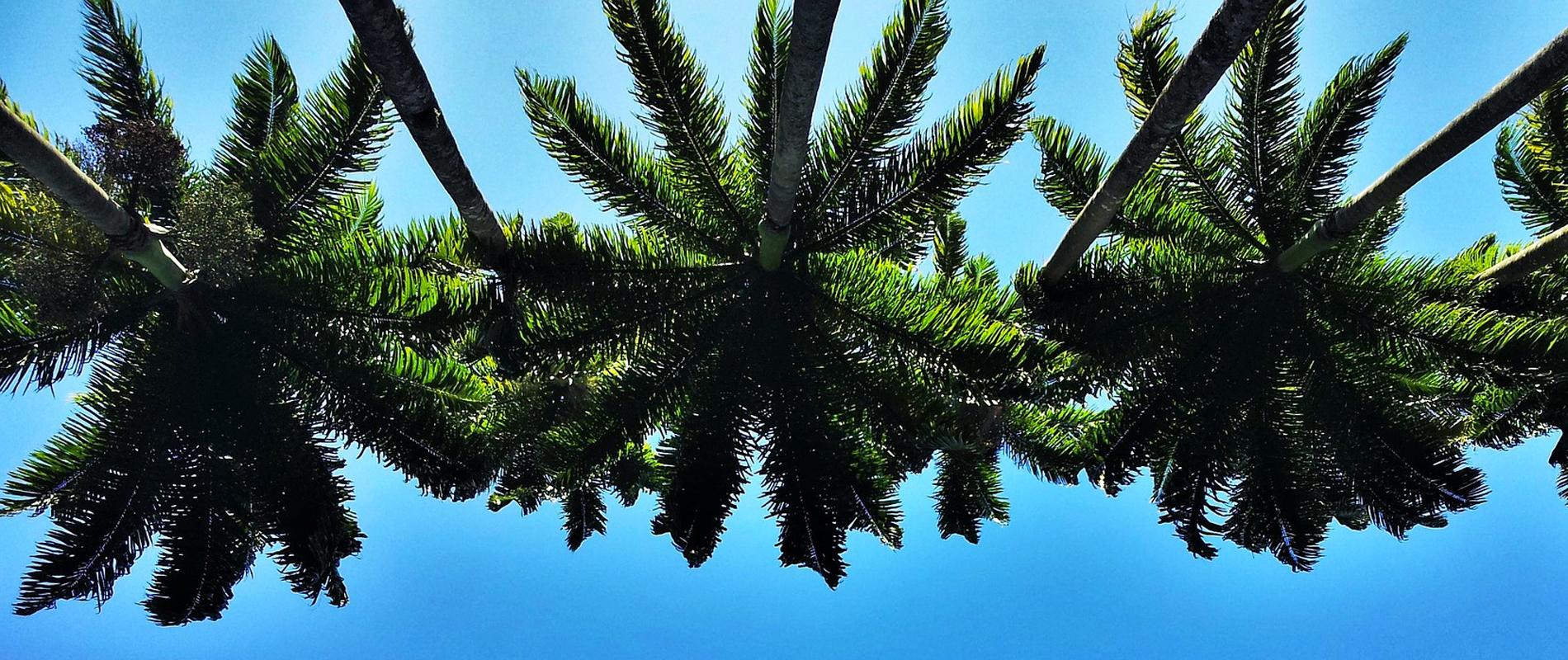 Brésil | Palmiers