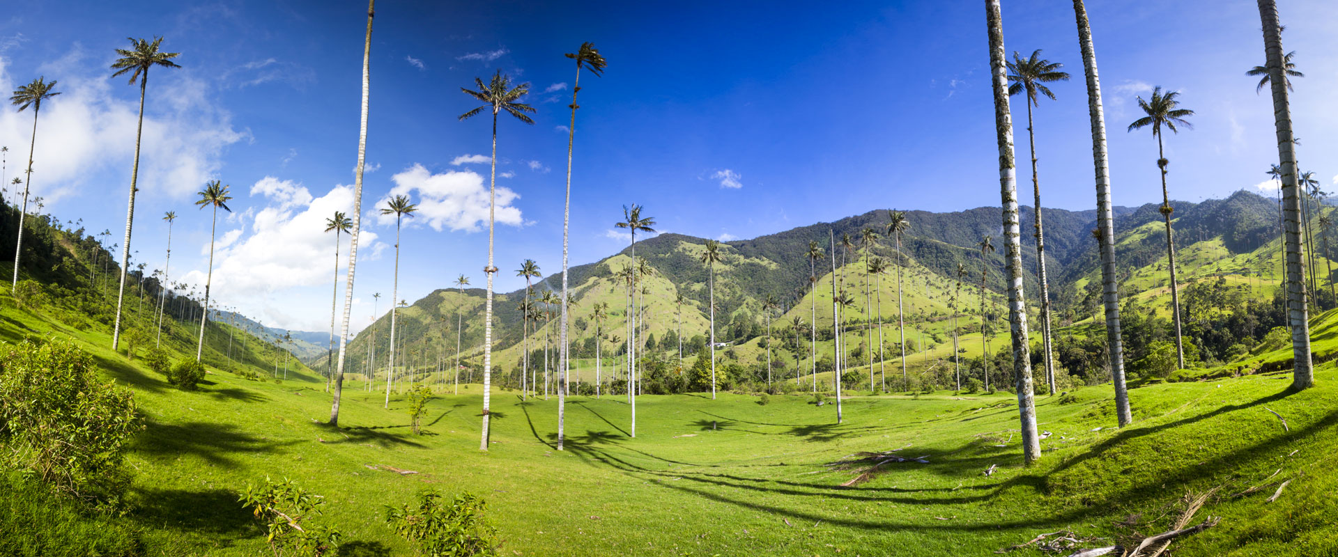 Colombie | Vallée de Cocora