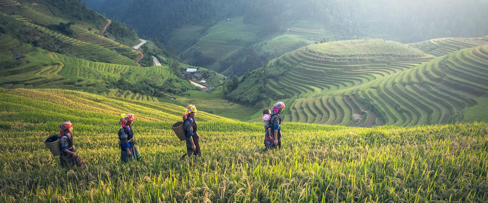 Thaïlande | Rizières de Chang Mai