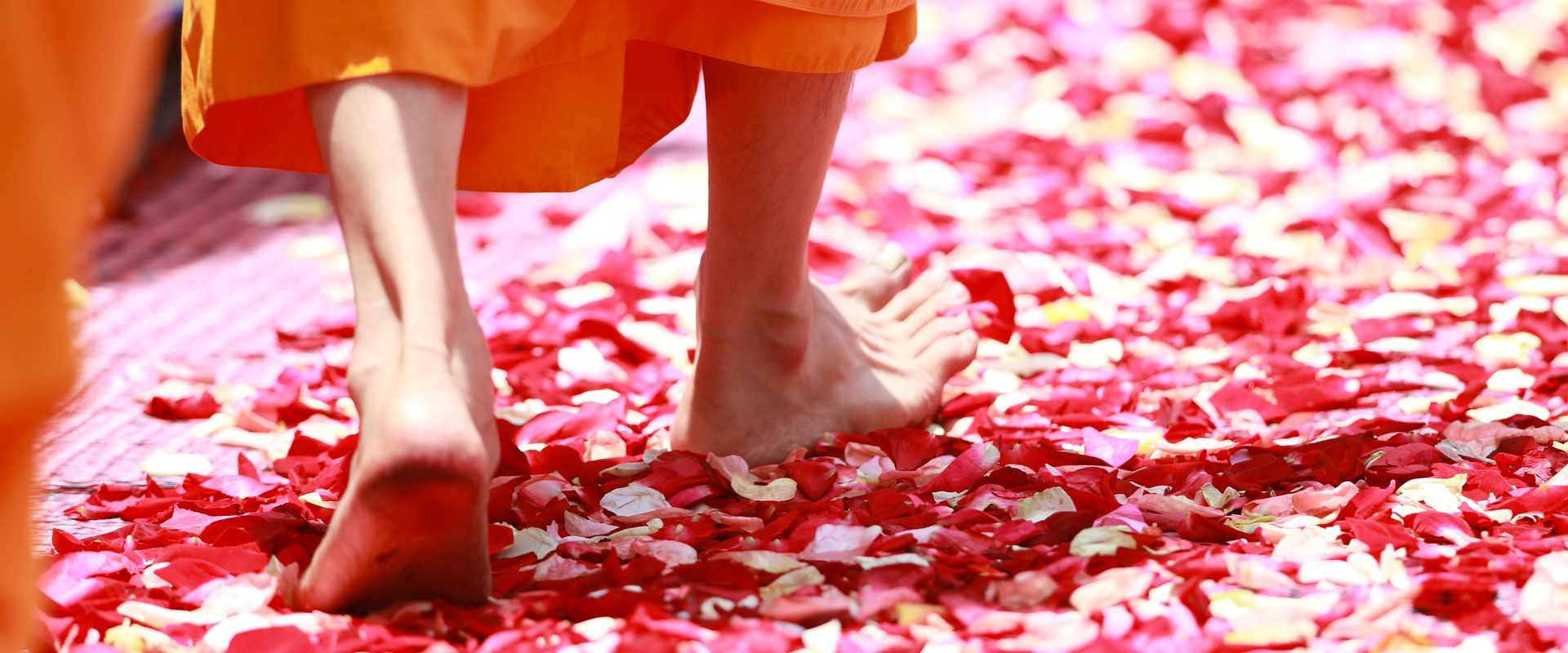 Thaïlande | Moine bouddhiste