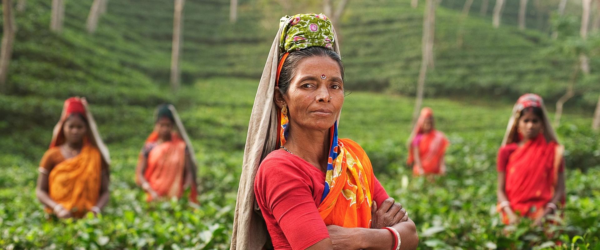 Inde | Plantations de thé du Kerala