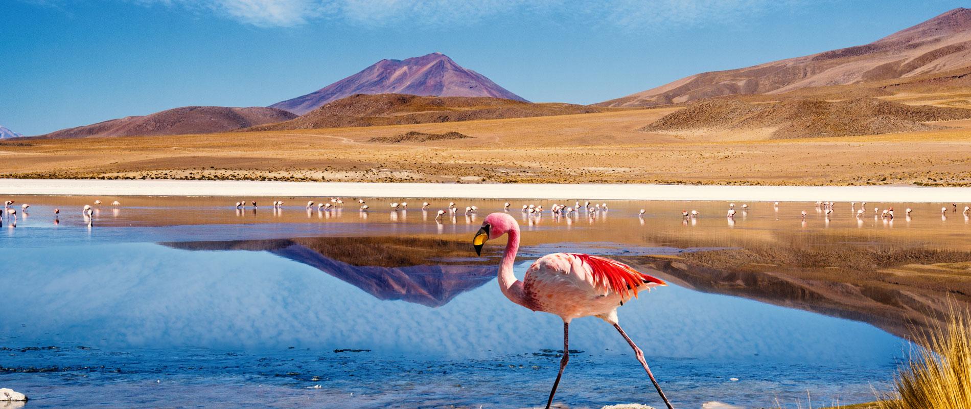 Chili & Bolivie | Altiplano, lagunes & flamants roses