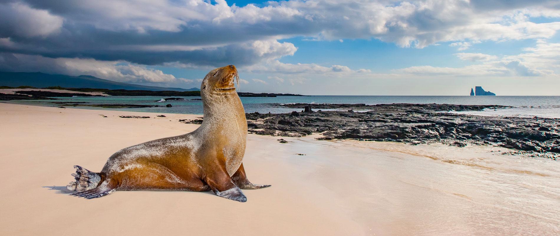 Équateur |Galapagos